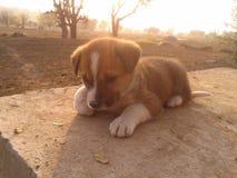 Filhotes de cachorro bonitos Imagem de Stock Royalty Free