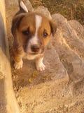 Filhotes de cachorro bonitos Fotos de Stock Royalty Free