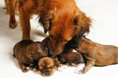 Filhotes de cachorro cegos Imagens de Stock