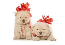 filhotes de cachorro da Comida-comida com curvas vermelhas grandes Imagem de Stock Royalty Free