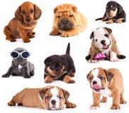 Filhotes de cachorro de raças diferentes foto de stock royalty free