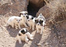 Filhotes de cachorro dispersos Fotos de Stock