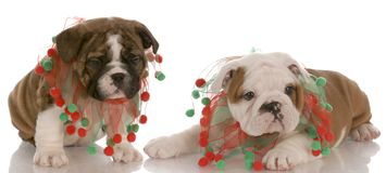 Filhotes de cachorro do Natal Imagem de Stock