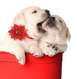 Filhotes de cachorro do Natal fotos de stock