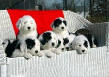 Filhotes de cachorro do Natal Imagem de Stock Royalty Free