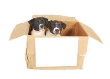 Filhotes de cachorro em uma caixa com um sinal em branco. imagens de stock