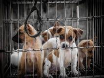 Filhotes de cachorro em uma gaiola Fotografia de Stock Royalty Free