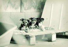 Filhotes de cachorro em uma pena Imagens de Stock