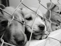Filhotes de cachorro em uma pena Imagem de Stock
