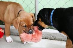 Filhotes de cachorro em uma pena que joga o reboque Fotos de Stock Royalty Free