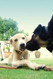 Filhotes de cachorro encantadores Fotografia de Stock
