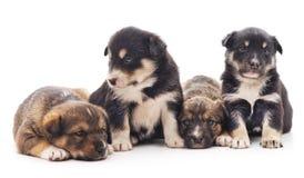 Filhotes de cachorro pequenos imagens de stock royalty free