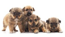 Filhotes de cachorro pequenos fotos de stock royalty free