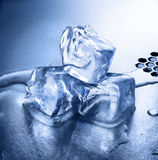 Filhotes do gelo Imagem de Stock Royalty Free