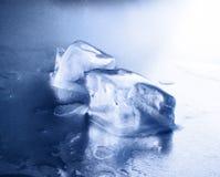 Filhotes do gelo Imagens de Stock Royalty Free