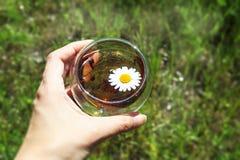 Fili?anka chamomile herbata w r?ce na zielonej trawie zdjęcie stock