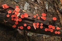 Filiżanka czerwoni grzyby fotografia stock