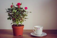 Filiżanka herbaciane i herbaciane róże Obrazy Stock