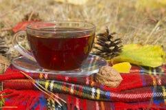 Filiżanka herbata na czerwonym w kratkę szaliku Obrazy Stock