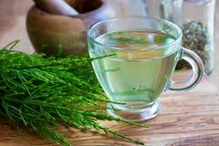 Filiżanka horsetail herbata z świeżym horsetail obrazy stock
