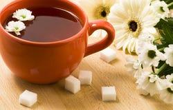 Filiżanka ziołowa herbata Obrazy Stock