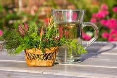 Filiżanka ziołowa herbata dla medycznego use Zdjęcie Royalty Free
