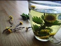 Filiżanka ziołowa herbata na białym tle Obraz Royalty Free