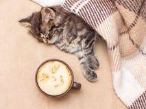Filiżanki kawy pobliska figlarka która jest uśpiona troszkę Gorąca kawa ja obrazy stock