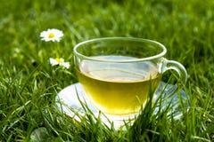 Filiżanka herbata w trawie z stokrotkami Obrazy Stock