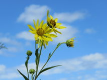 Filiżanka kwiat Obraz Stock
