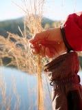 Fili d'erba dorati della tenuta femminile della mano Lungo collega il rivestimento con un manicotto rosso fotografia stock libera da diritti