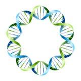 Fili del DNA sul cerchio. Vettore. Immagini Stock