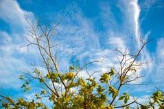 Filiais & Cloudscape Imagens de Stock Royalty Free