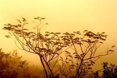 Filiais através da névoa foto de stock