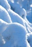 Filiais cobertas na neve fotografia de stock