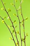 Filiais com as folhas verdes da mola Imagens de Stock Royalty Free