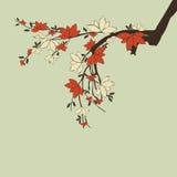 Filiais com flores ilustração do vetor
