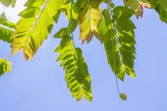 Filiais com folhas verdes Fotos de Stock