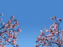 Filiais cor-de-rosa Imagens de Stock
