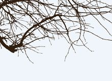Filiais da árvore Fotografia de Stock