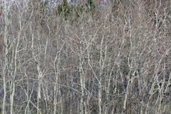 Filiais das árvores Imagens de Stock Royalty Free