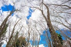 Filiais das árvores fotos de stock