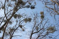 Filiais das árvores Imagens de Stock