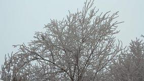 Filiais das árvores cobertas com o hoarfrost vídeos de arquivo