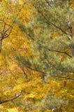 Filiais das árvores no outono Foto de Stock Royalty Free