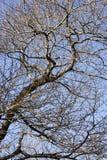 Filiais de árvore Fotos de Stock