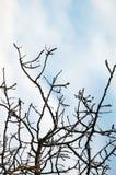 Filiais de árvore Imagens de Stock Royalty Free