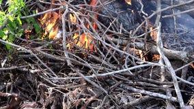 Filiais de árvore ardentes video estoque