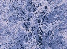Filiais de árvore cobertas com a neve foto de stock