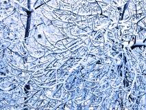 Filiais de árvore cobertas com a neve imagens de stock royalty free